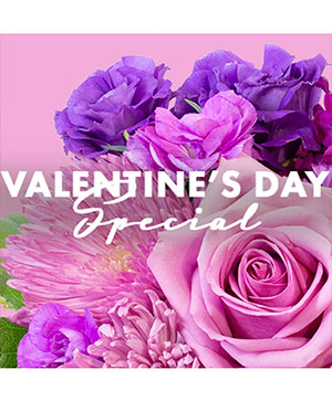 Valentine's Day Special Designer's Choice in Corner Brook, NL | The Orchid