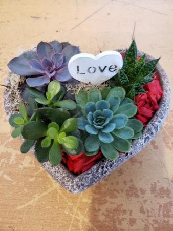 Heart Succulent Plant