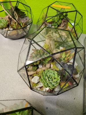 Valentine's Gift Black Geode Terrarium Terrarium Succulent Plants in Las Vegas, NV | AN OCTOPUS'S GARDEN