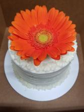Vanilla Mini Cake 4