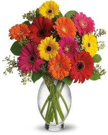 Bright Vibrant Gerber  Vase