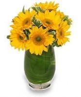 Vase of gerber daisies