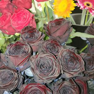 Velvet Roses Single in Langford, BC | PETALS N BUDS METCHOSIN FLORIST