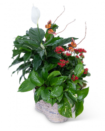 Verdant Basket with Butterflies Plant