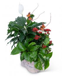 Verdant Basket with Butterflies Plant