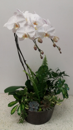Verdant Orchid Extra large arrangement planter