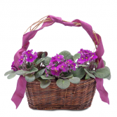 Very Violet Basket Arrangement