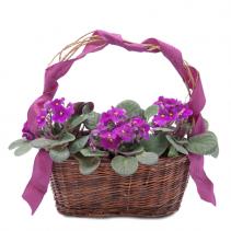 Very Violet Basket Arrangement