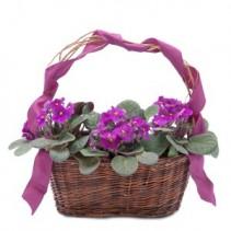 Very Violet Basket Basket