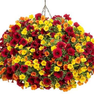 "It's So You -- 12"" Hanging Basket"
