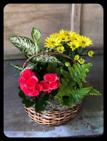 Vibrant Garden Basket