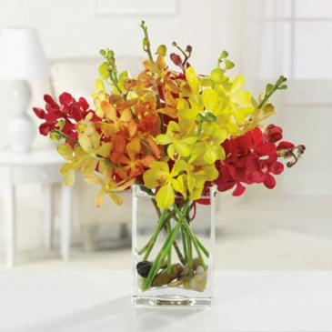 Vibrant Mokaras Orchids Flowers in a vase