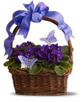Vibrant Violets Plant basket