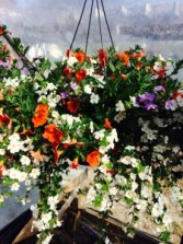 Victorian Hanging Basket available during the months May-July