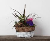 Vine Basket  Plant  Garden