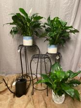 Vintage inspired  Plant Stands