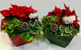 Vintage Winter  Planters Plants