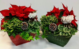 Vintage Winter  Planters Plants in Chatham, NJ | SUNNYWOODS FLORIST