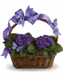 Violet And Butterflies Basket Flower
