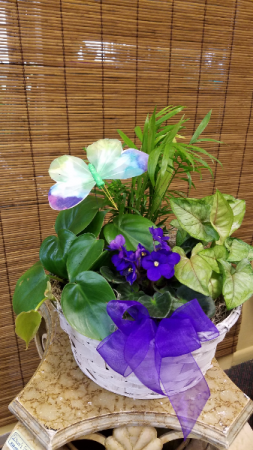 Violet and Green Garden