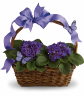violet basket all occasion