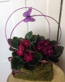 Violet Purse Plant Bouquet
