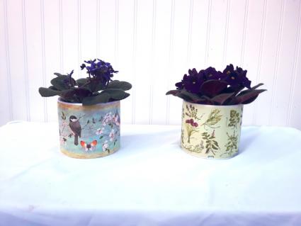 Violet  Planter plant