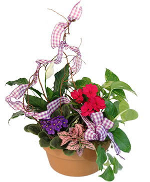 Violet & Variety Flowering Plants in Corinth, MS | MAGNOLIA FLOWER BASKET