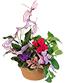 Violet & Variety Flowering Plants