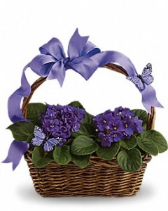 Violets and Butterflies  in Dover, NH | SWEET MEADOWS FLOWER SHOP