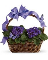 Violets and Butterflies Basket Arrangement