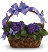 Violets and Butterflies Basket Planter Basket