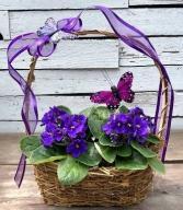 Butterflies & Violets Basket Plant