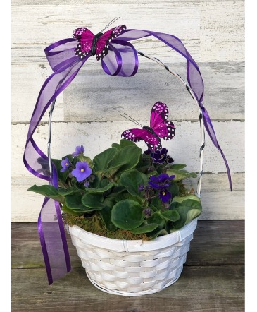 Violets and Butterflies Plant
