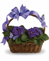 Violets & Butterflies T92-3
