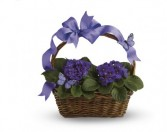 Violets And Butterflies T923A Plant