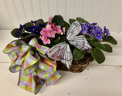 Violets and Butterfly