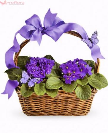 Violets & Butterflies Plant