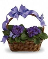 Violets & Butterfly Basket