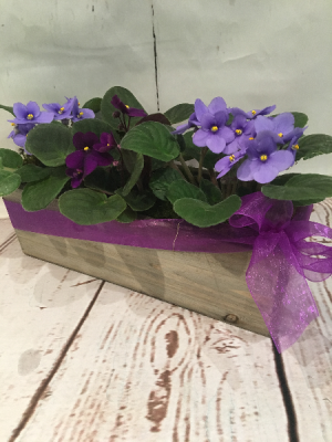 Violets Cubed  in Easton, CT | Felicia's Fleurs