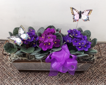 Violets In Bloom Tin Dishgarden Plants (local only)