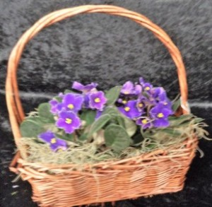 Violets Violets Everywhere Potted Plant in Port Huron, MI | CHRISTOPHER'S FLOWERS