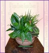 Vogue's Classic Dish Garden II Plant