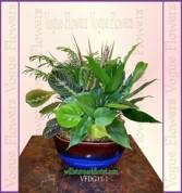 Vogue's Classic Dish Garden Plant