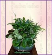 Vogue's Deluxe Dish Garden II Plant