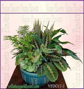 Vogue's Deluxe Dish Garden Plant