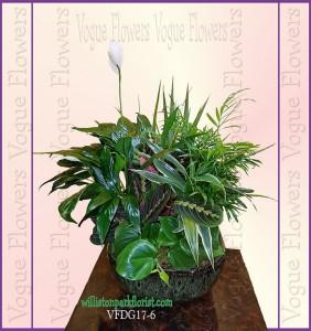 Vogue's Premium Dish Garden II Plant