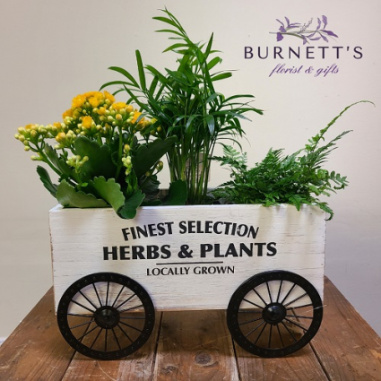Wagon Planter Planter