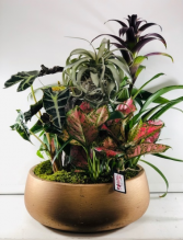 Warm Assortment with Air Plant  Dish Garden of Plants