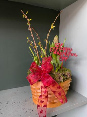 Watch a grow bulb garden Valentines